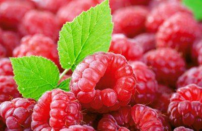 Лучшая ягода на вашей грядке: выращиваем малину